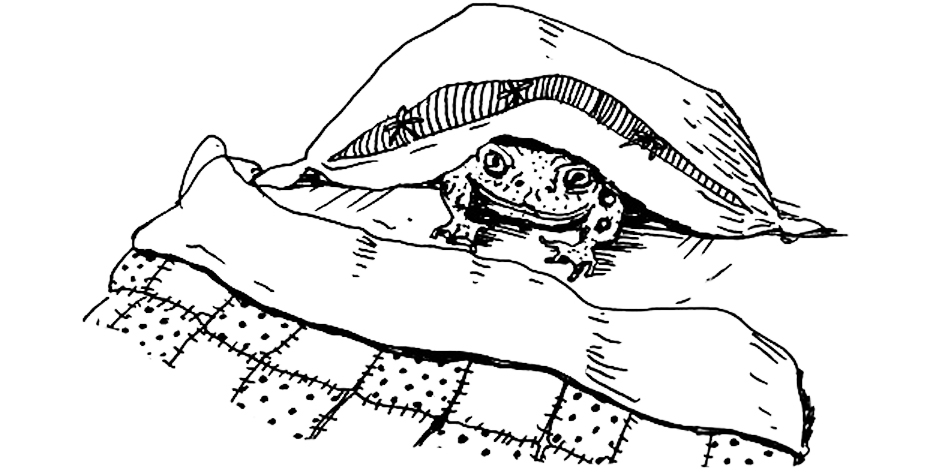 toad in bed final.jpg