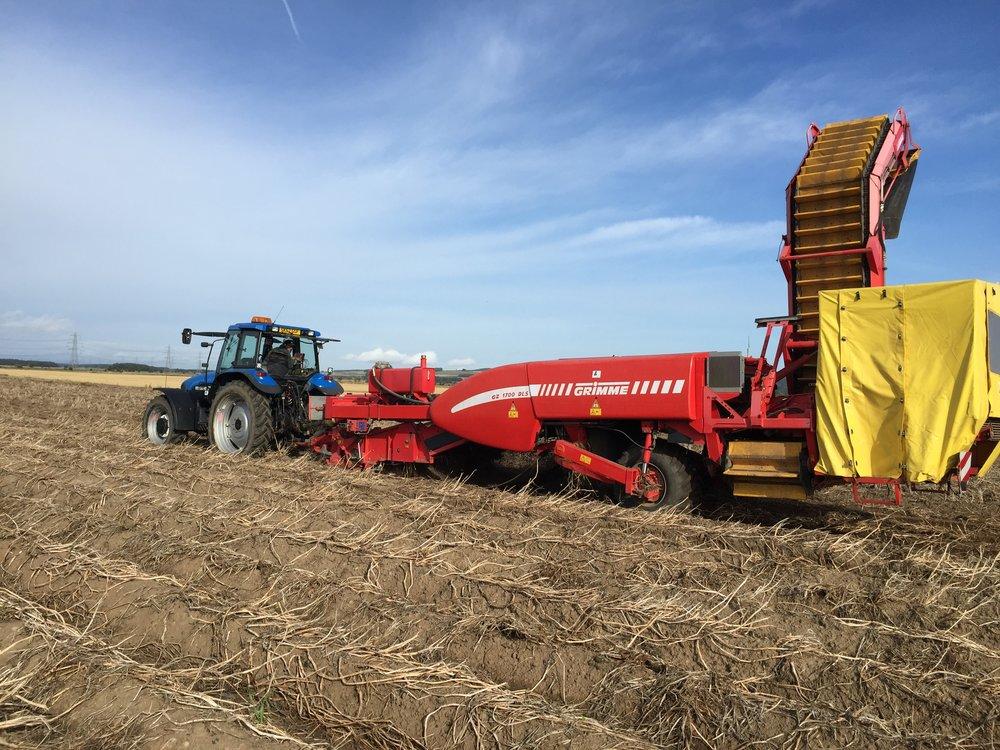 harvesting PFA.jpg