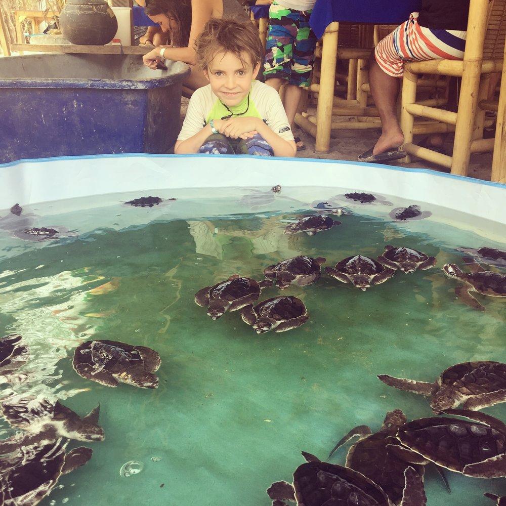Turtle Hatchery, Gili Meno.