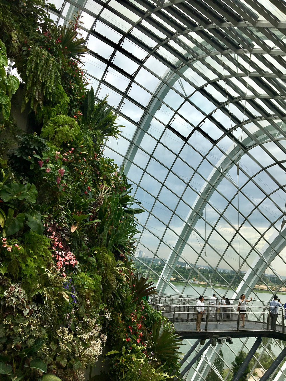 It's hard to get a picture which shows the huge expanse of the indoor rainforest canopy with the backdrop of the Singapore Skyscrapers.