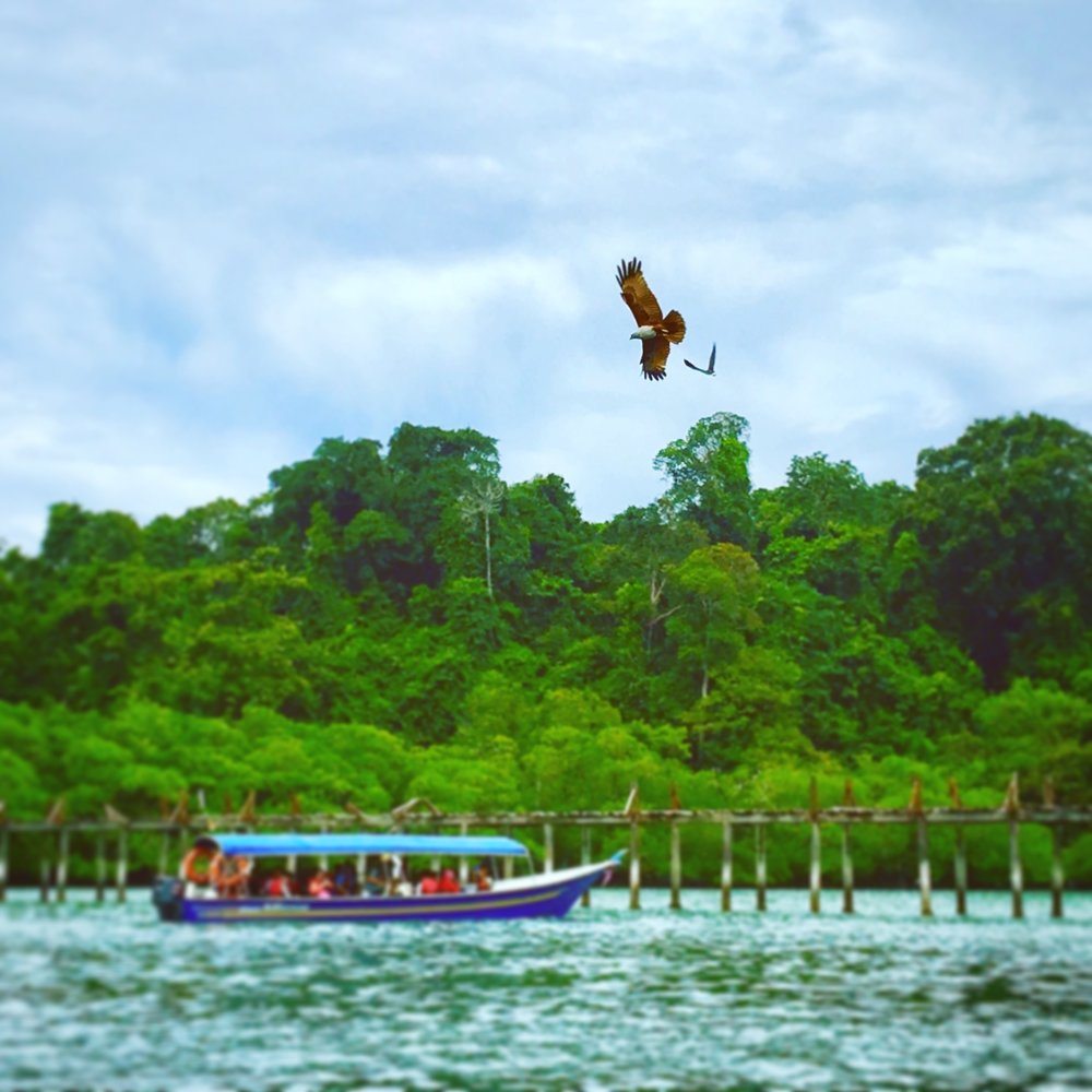 Boat trip, island hopping. The Brahmini Kites are a symbol of Langkawi after which the island is named. 'Island of the reddish brown eagle' isn't as catchy, so Langkawi it is. sadly the boat skippers throw chicken scraps in the water to attract the eagles which is damaging the eco system.