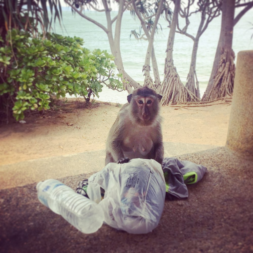 This little monkey tried to steal our bathers!! At Mu Ko National Park.