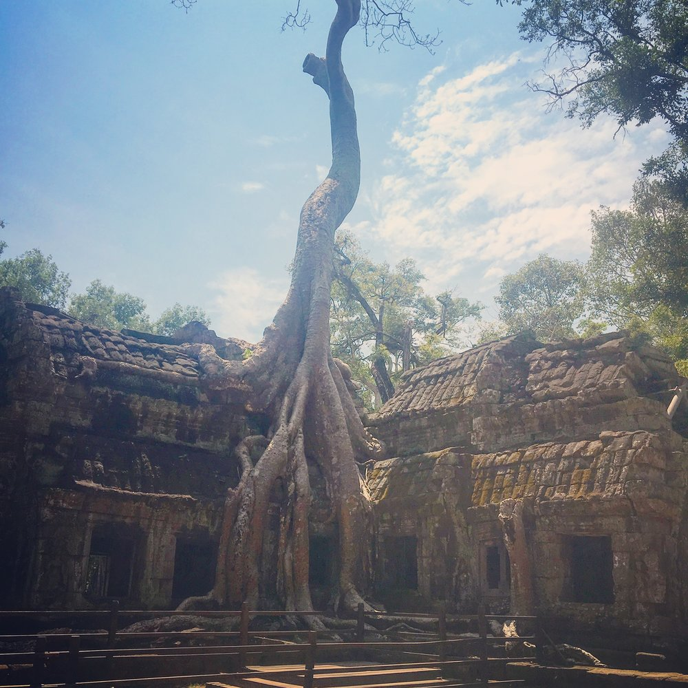 The Tomb Raider temple, Ta Prohm.
