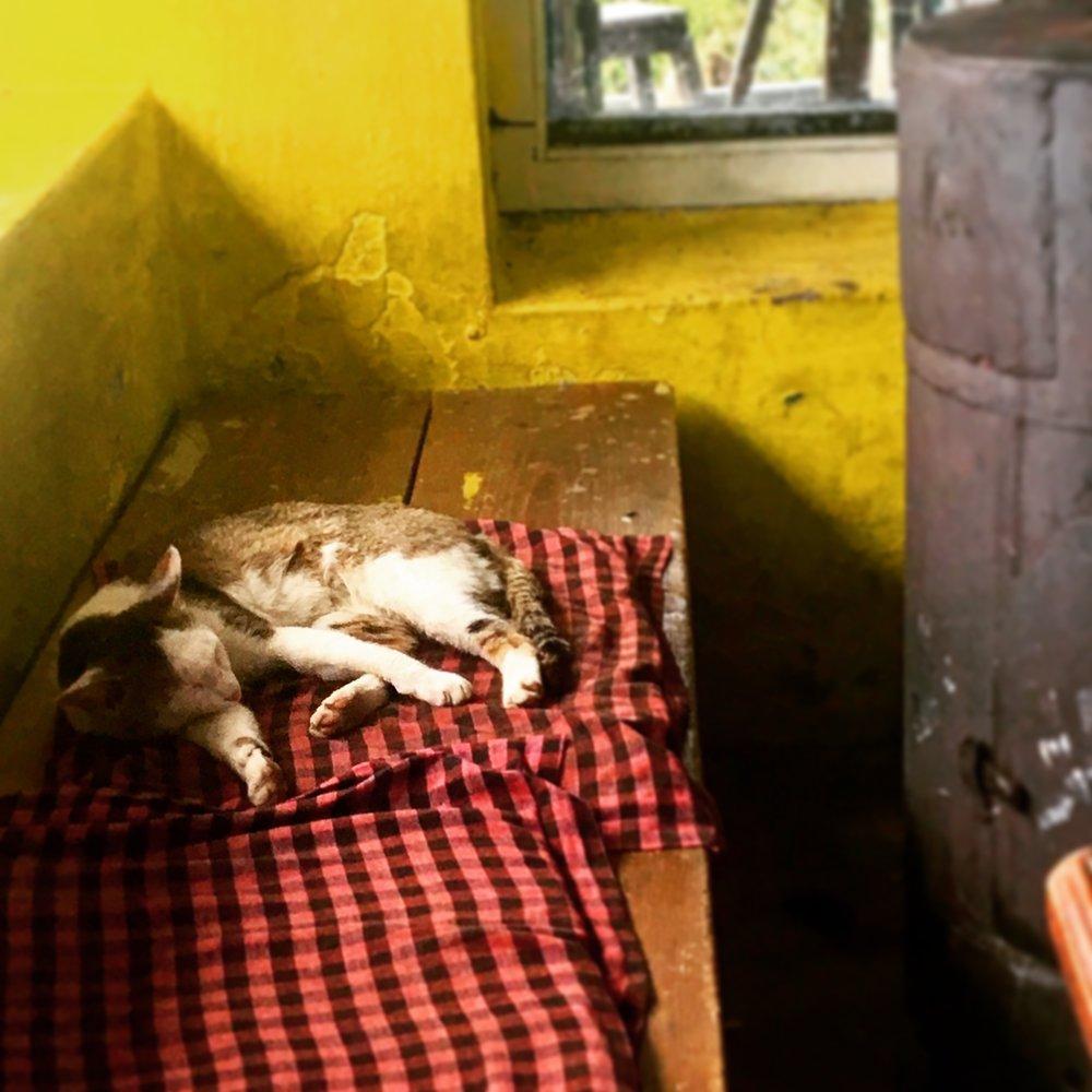 Happy cat in Tadopani