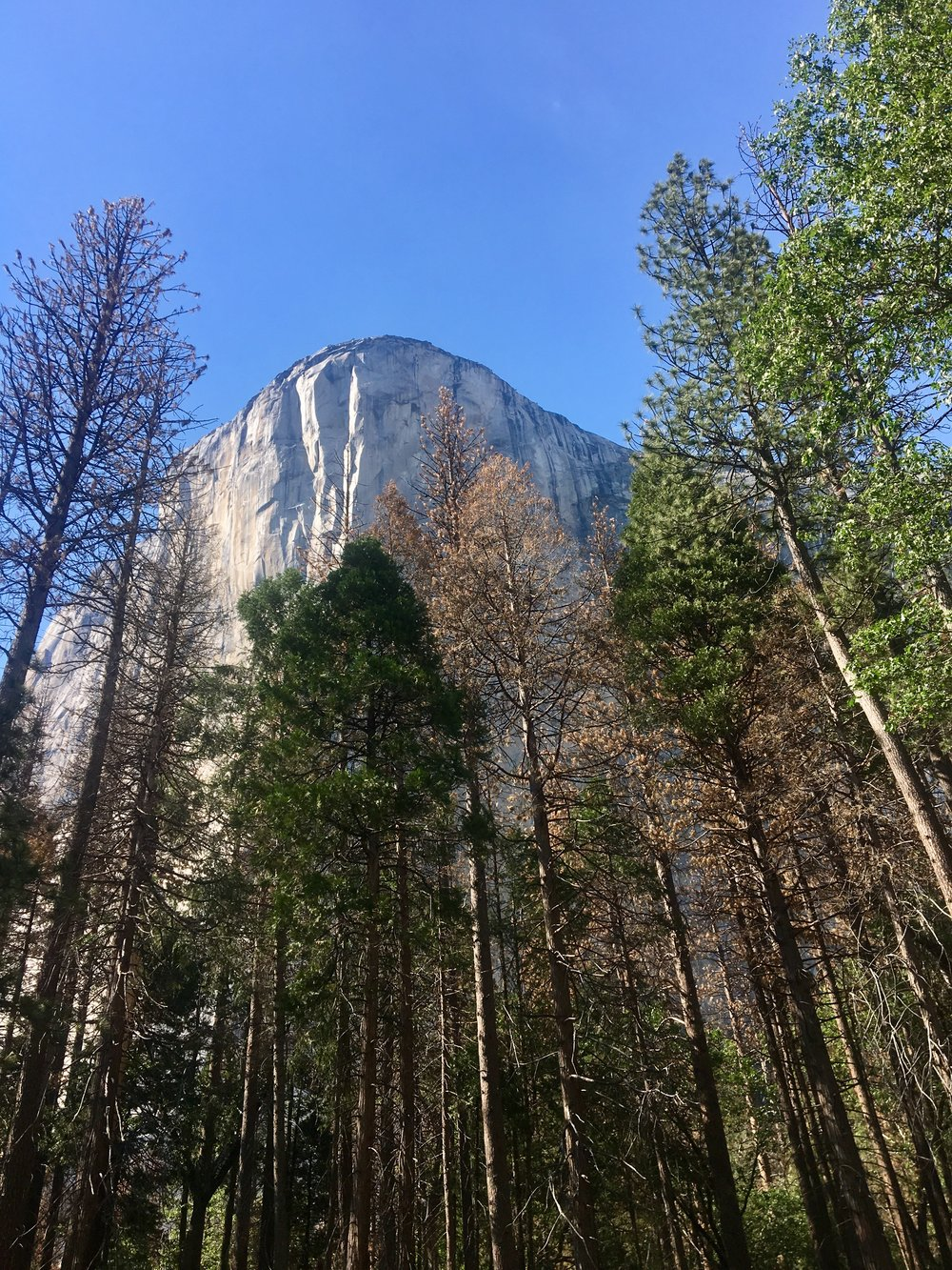 El Capitan. Yosemite.