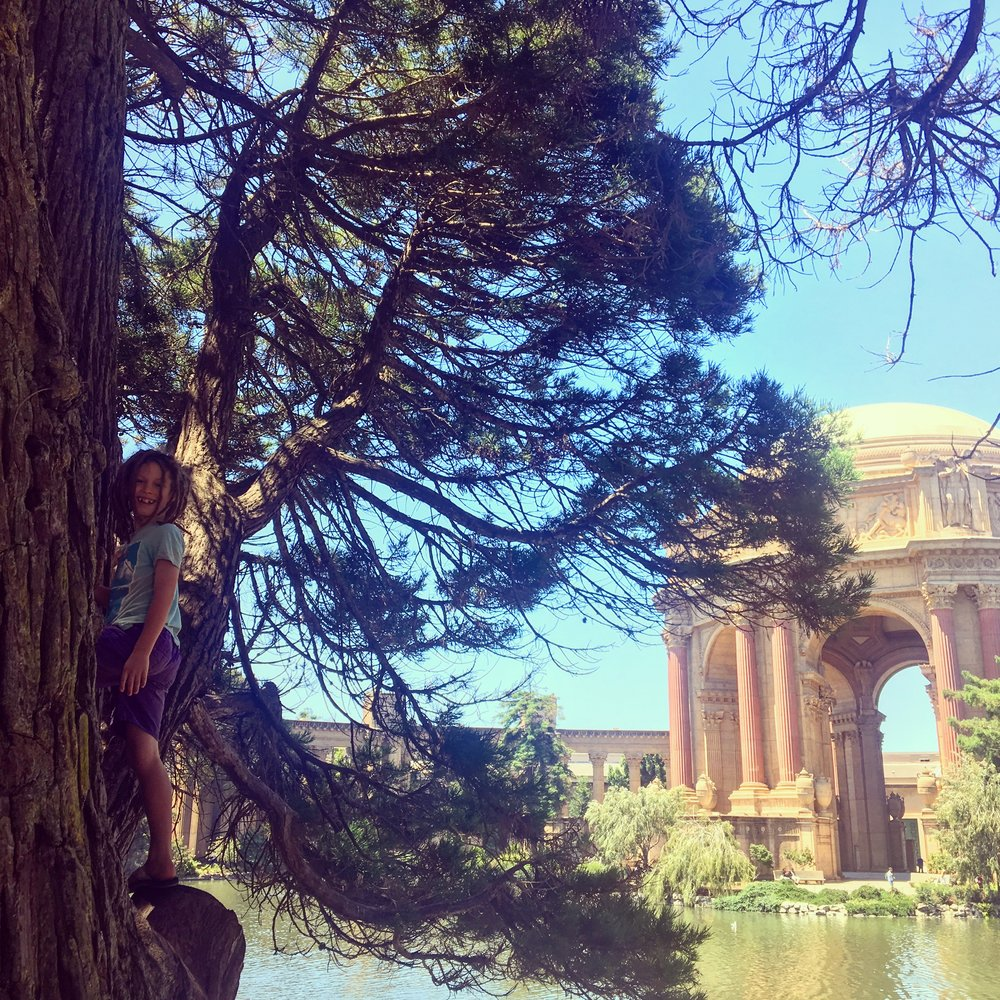 Tree climbing at the Palace of Fine Arts, San Fransisco.  Watch our for the turtles in the duck pond!