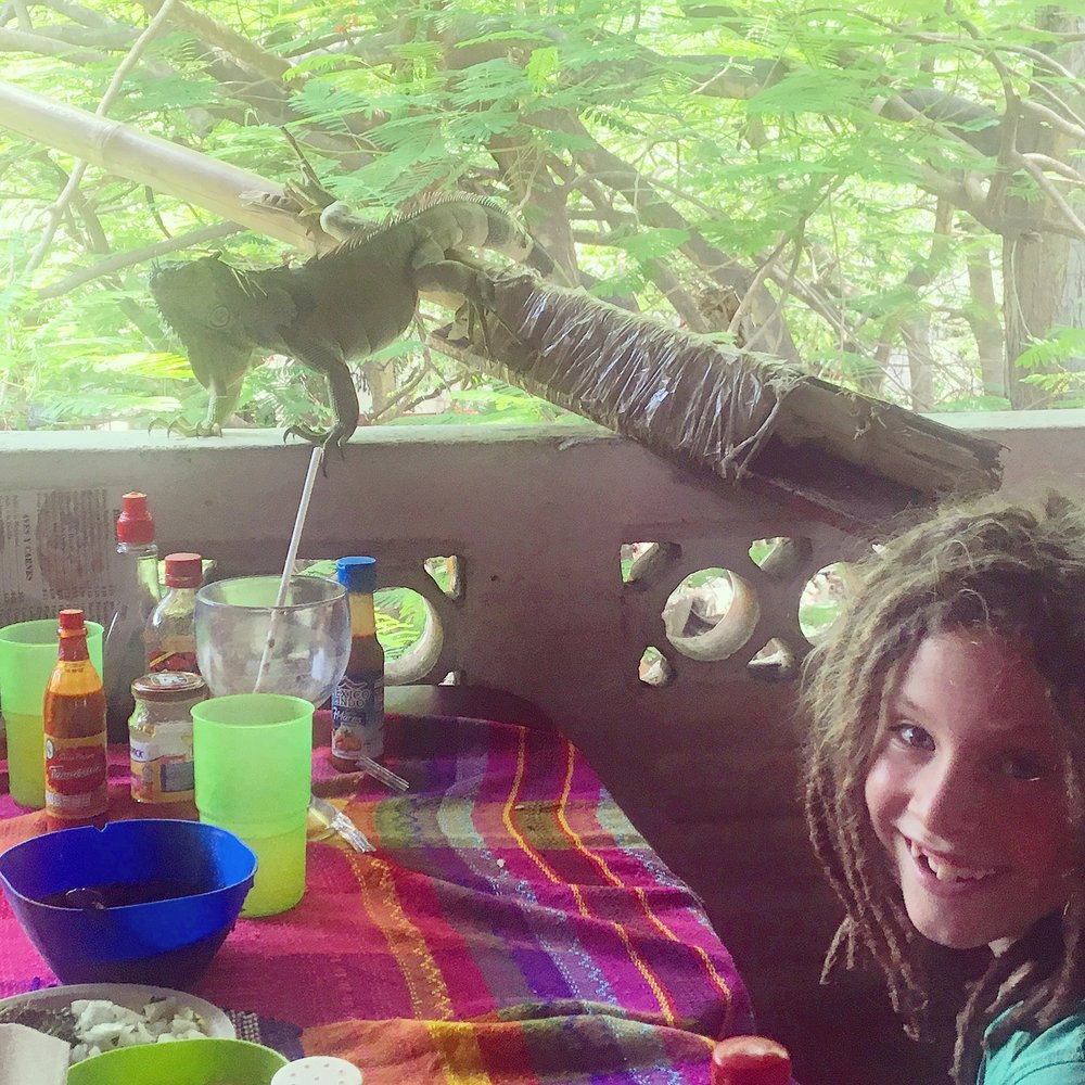 Just eating lunch and a friendly iguana pops by for a taco. This place was upstairs in a shopping centre or Mercado municipal at Rio Cuale. There were iguanas in so many of the trees, and later we even saw a crocodile in the river. SO MUCH wildlife!