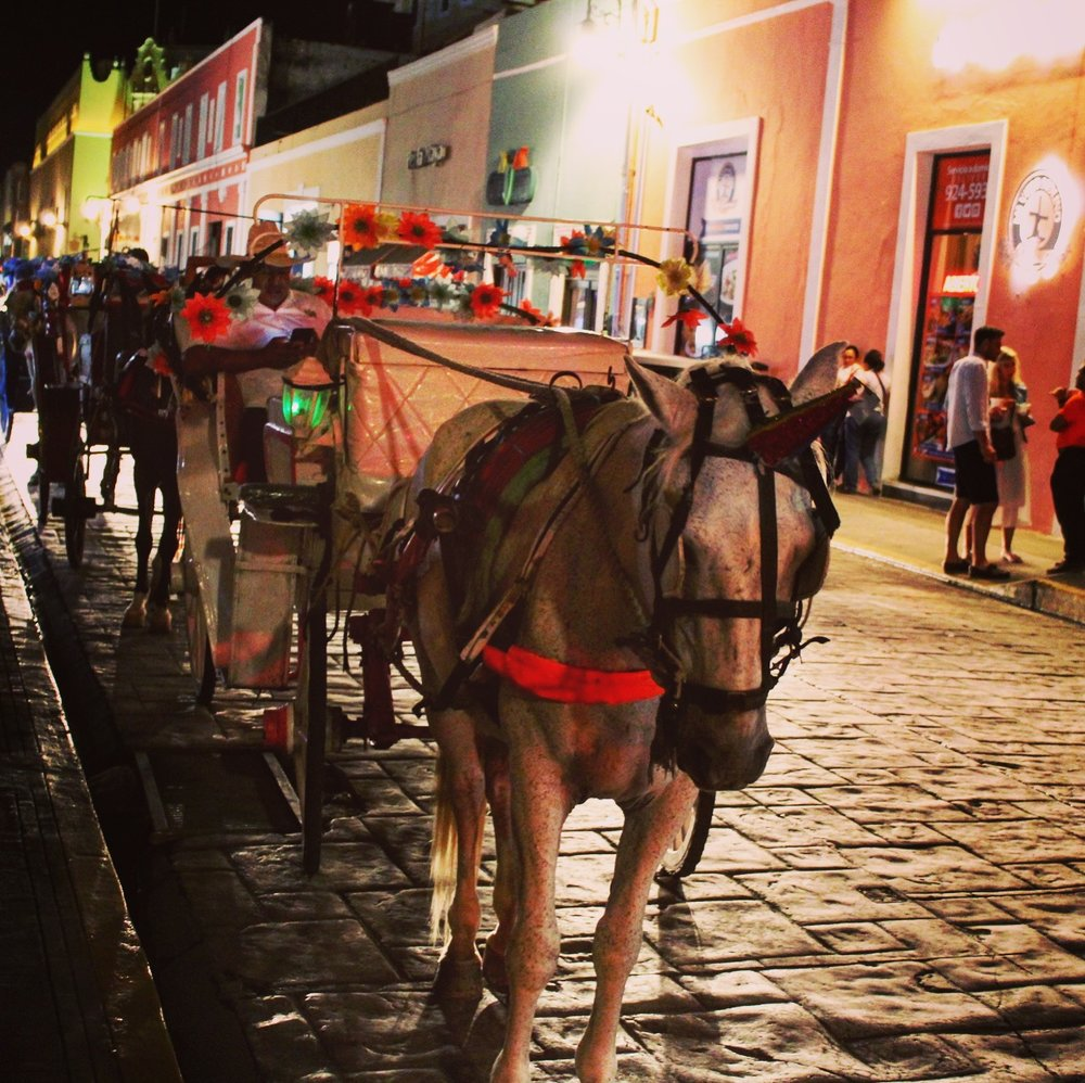 The horses in Merida town.