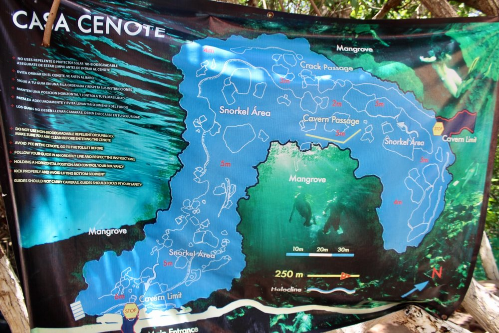 Casa Cenote is like a river that loops around- here is a map of where to swim and snorkel. The crocodile was towards the end of the loop at the furthest point form the entrance.