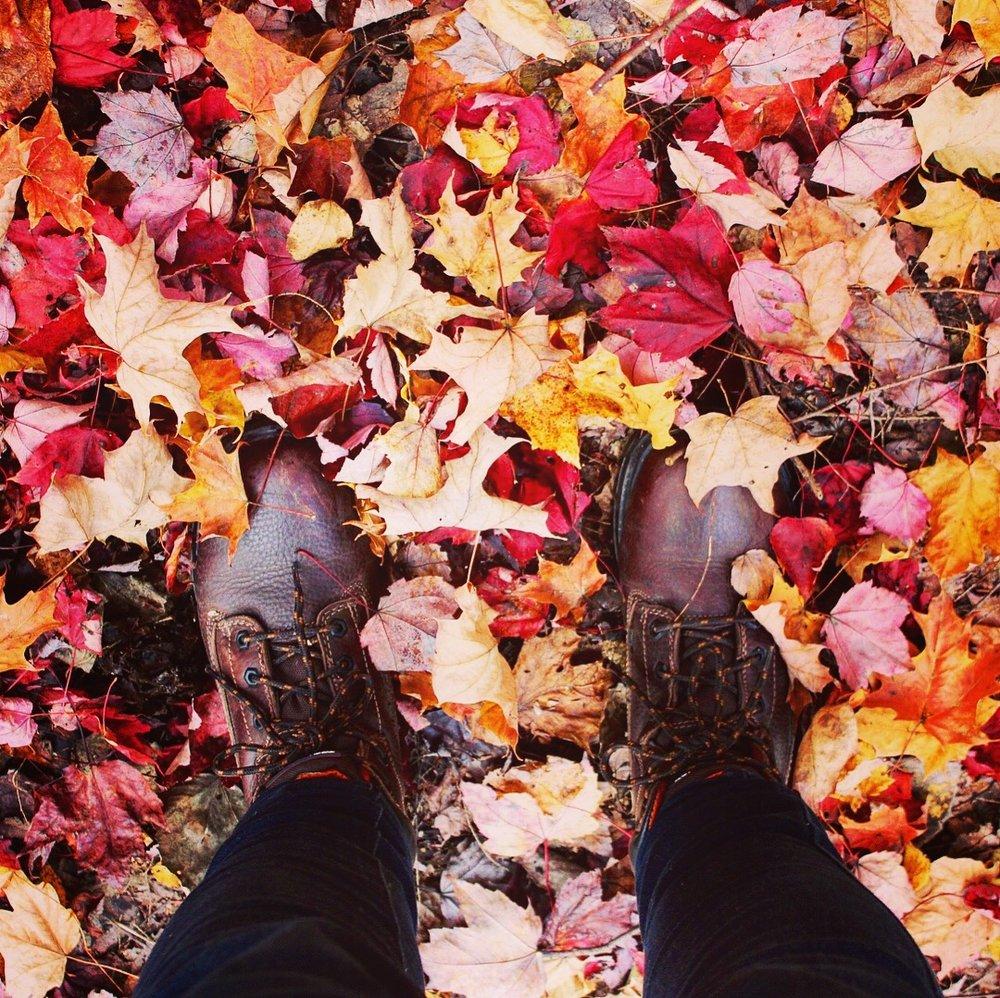 Maple leaves on the floor.