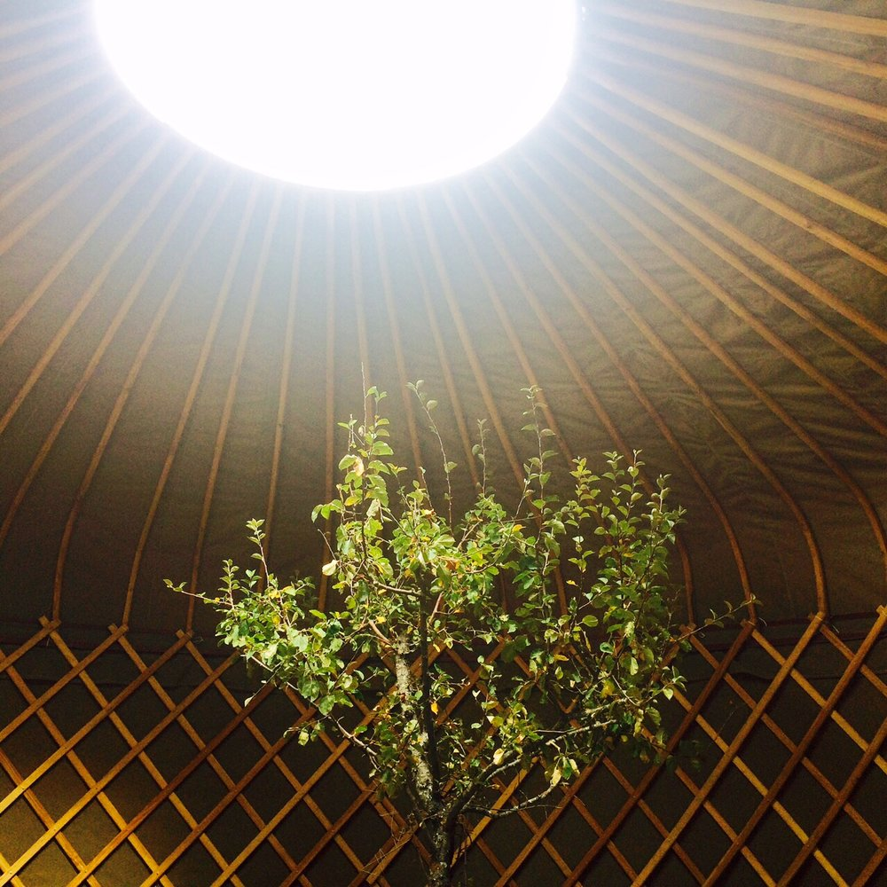 Someone left a tree inside the yurt.