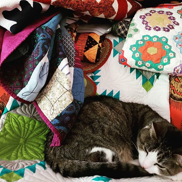 Simply not concerned with the pile of quilts accumulating around her as I prepare for a presentation at the Lake Norman Quilters meeting tomorrow in Mooresville, NC.  Excited!