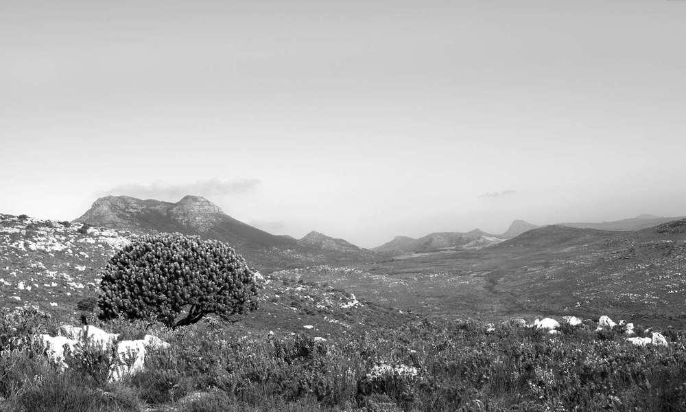 Boskoff landscape