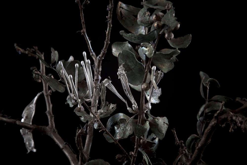NicBladen_Botanicals_Black Thorn, Swarthaak, Mongana -004.jpg