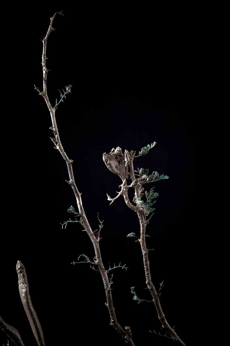 NicBladen_Botanicals_Candle  Thorn, Trassiebos, Mogoka-019.jpg