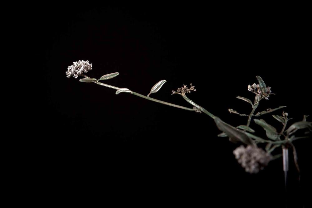 NicBladen_Botanicals_Koggelmandervoetkaroo-369.jpg