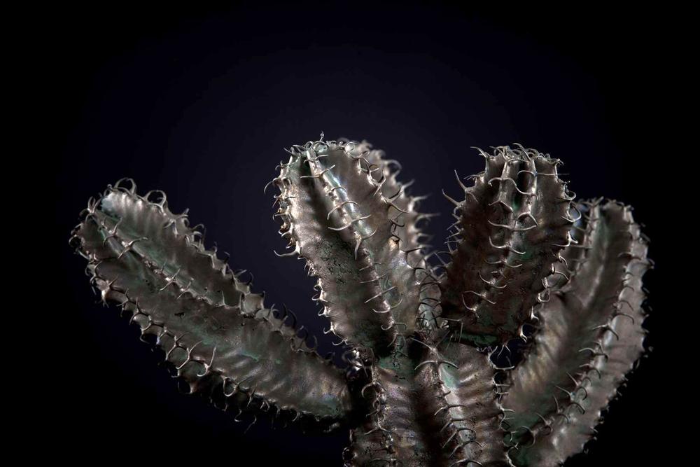 NicBladen_Botanicals_Slender Candelabra-Euphorbia, Gifboom-166.jpg