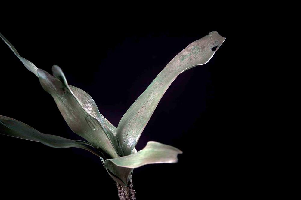 NicBladen_Botanicals_Pan Nerine, Vleilelie, Seeroogblom-334.jpg