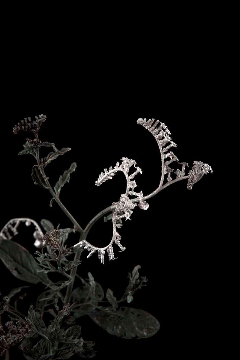 NicBladen_Botanicals_String of Stars, Hamelstertjie-266.jpg