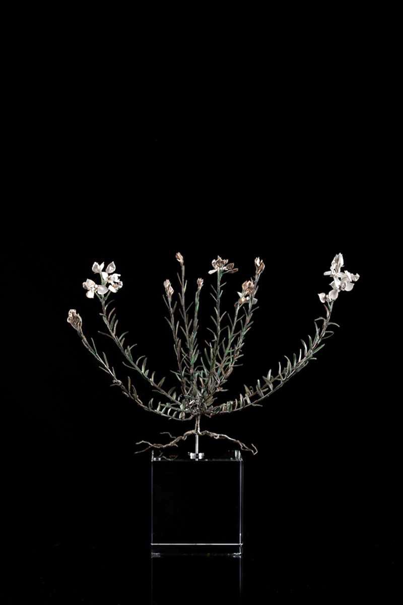 <i>Polygalaceae</i>