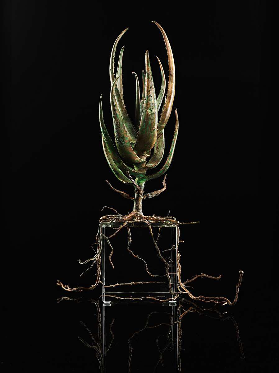<i>Aloe succotrina</i>