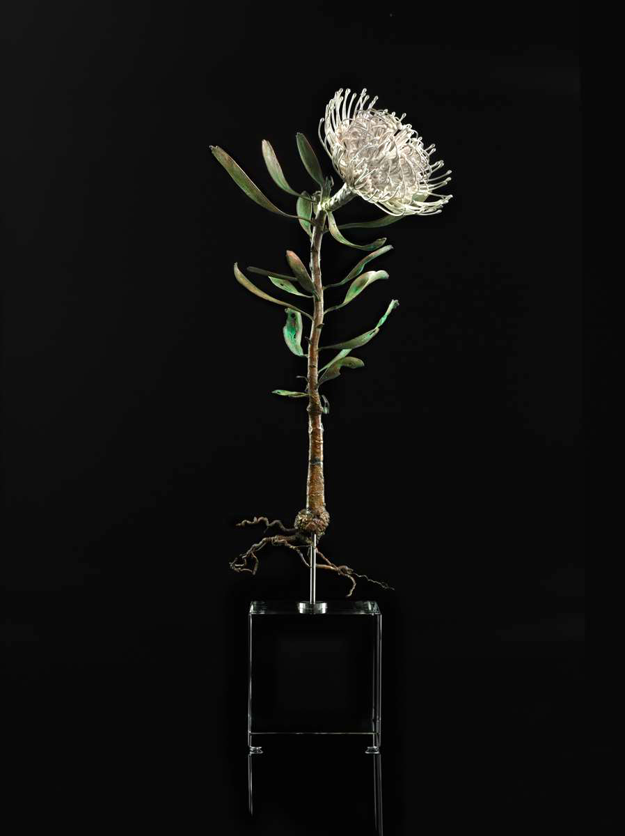 <i>Leucospermum cordiofolium</i>