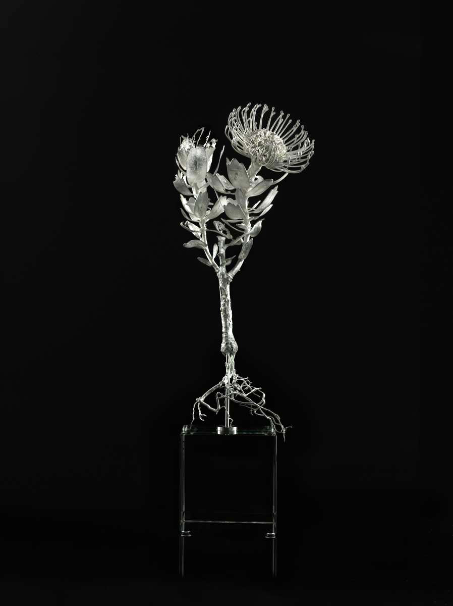 <i>Leucospermum tottum</i>