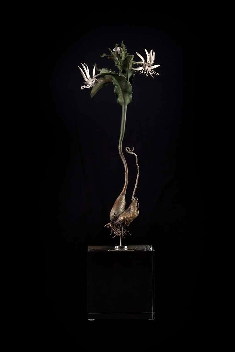<i>Ornithoglossum imbricatum</i>