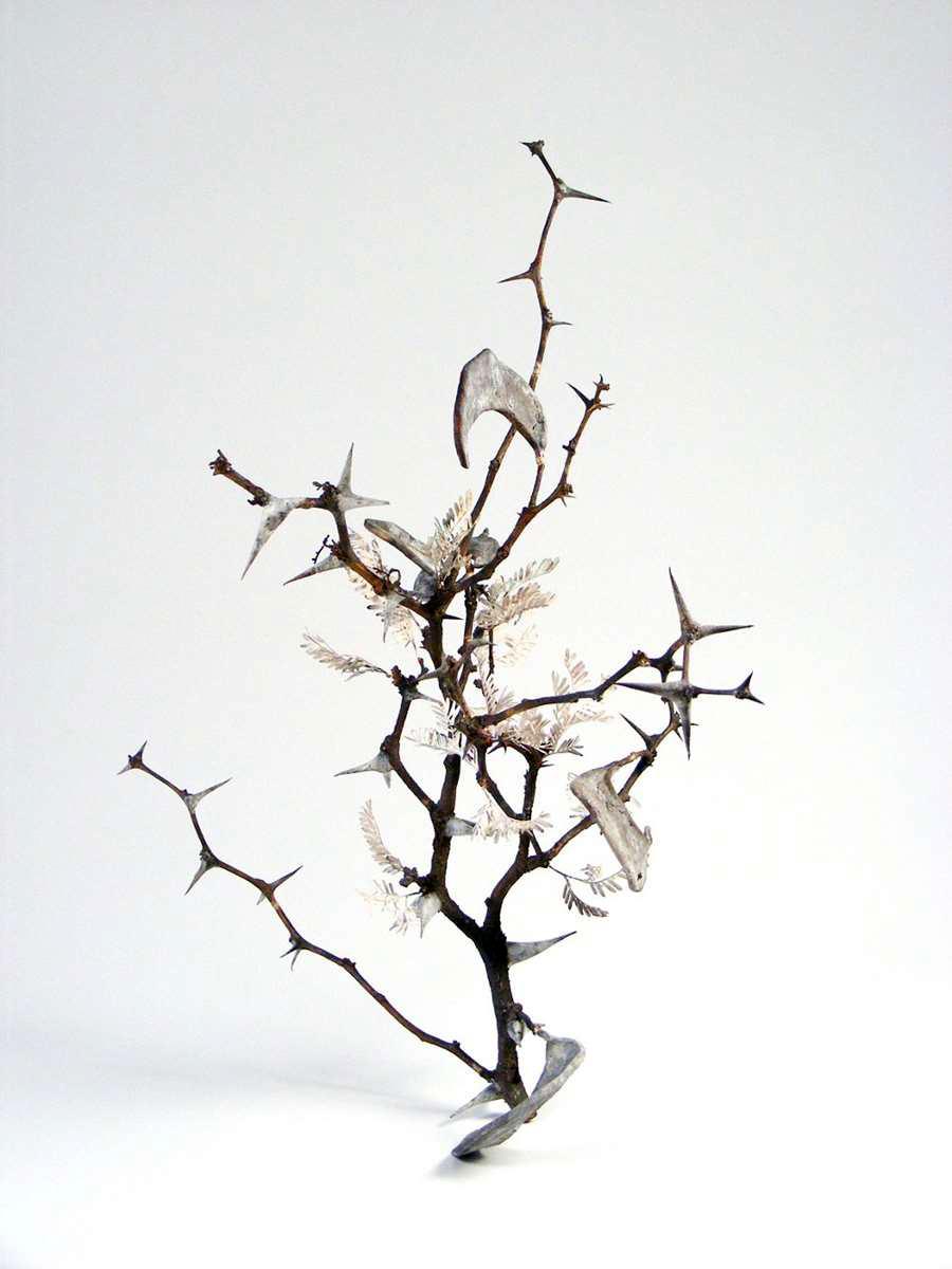 <i>Acacia erioloba I</i>(Thabazimbi)