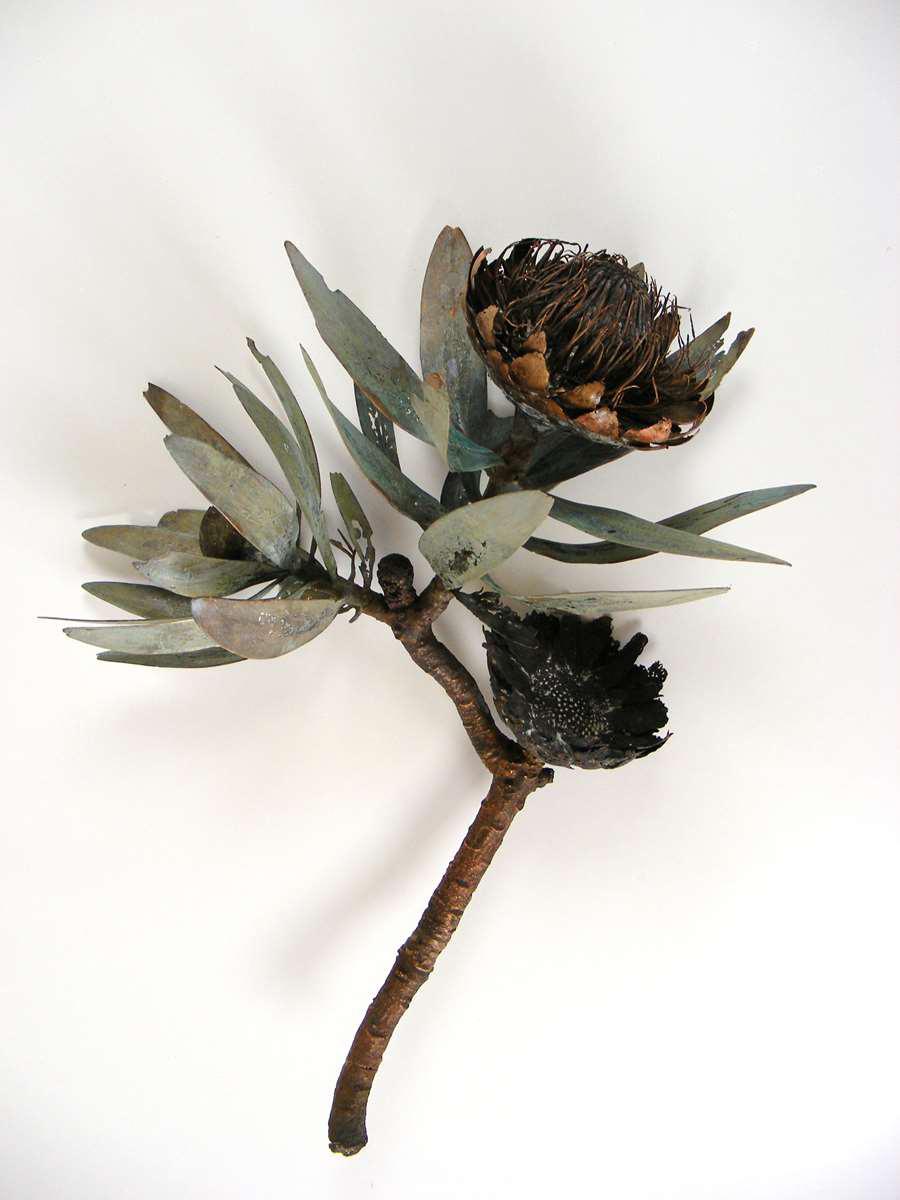 <i>Protea caffra </i>