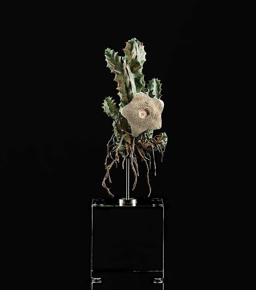 <i>Huernia brevirostris spp.baviaana  </i>
