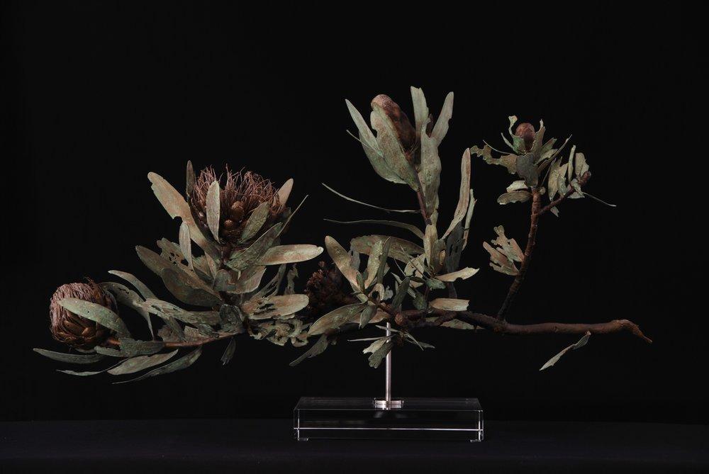 <i>Protea nitida dwarf</i>