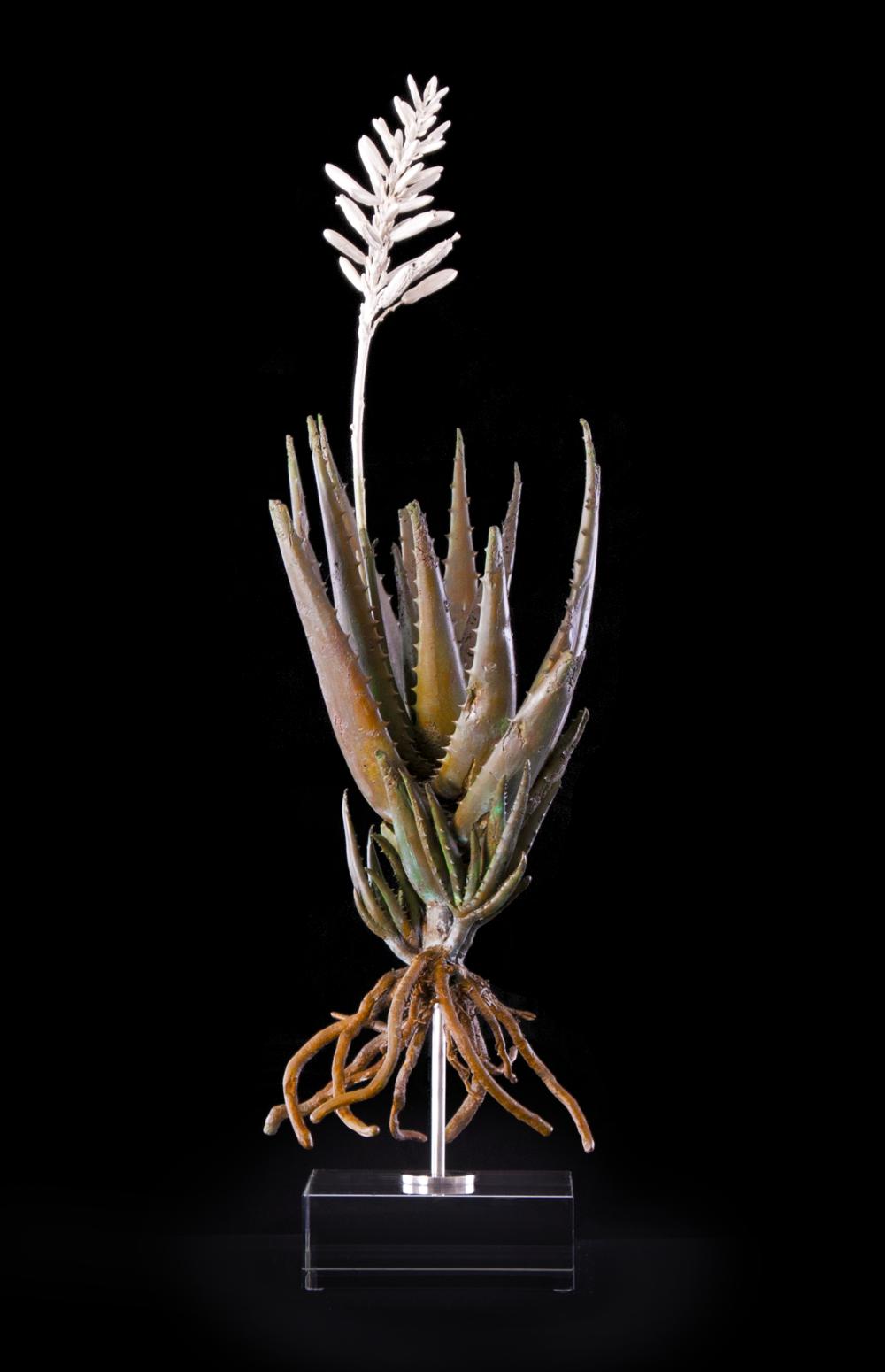 <i>Aloe falcata</i>