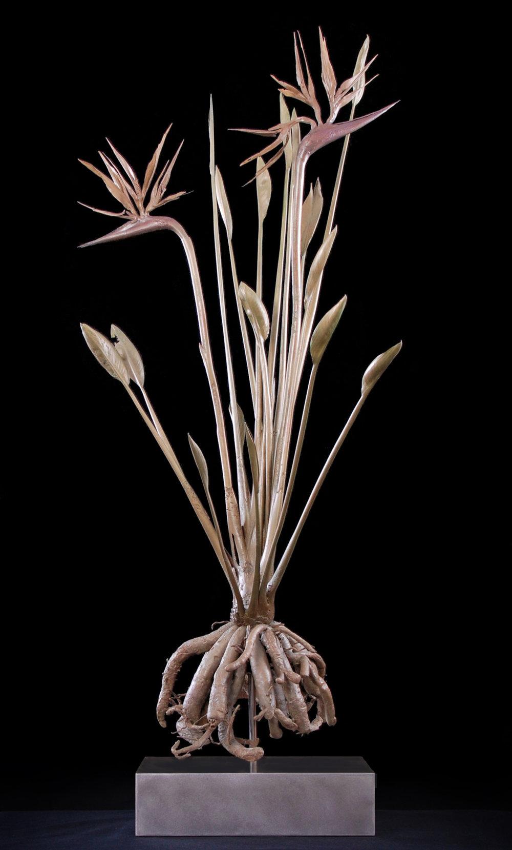 <i>strelitzia parvifolia</i>