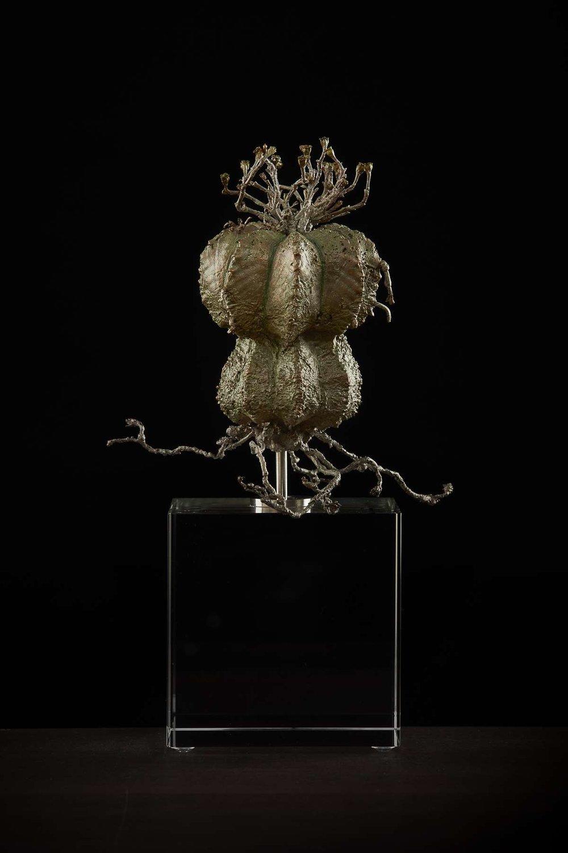 <i> Euphorbia meloformis</i>