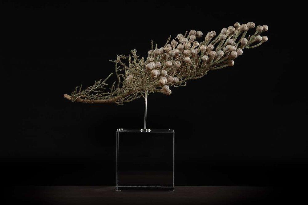 <i>Brunia noduliflora</i>