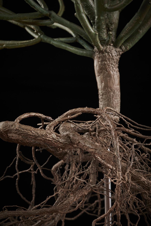 NicBladenBotanicals_LondonEX_ Euphorbia tirucalli_6036.jpg