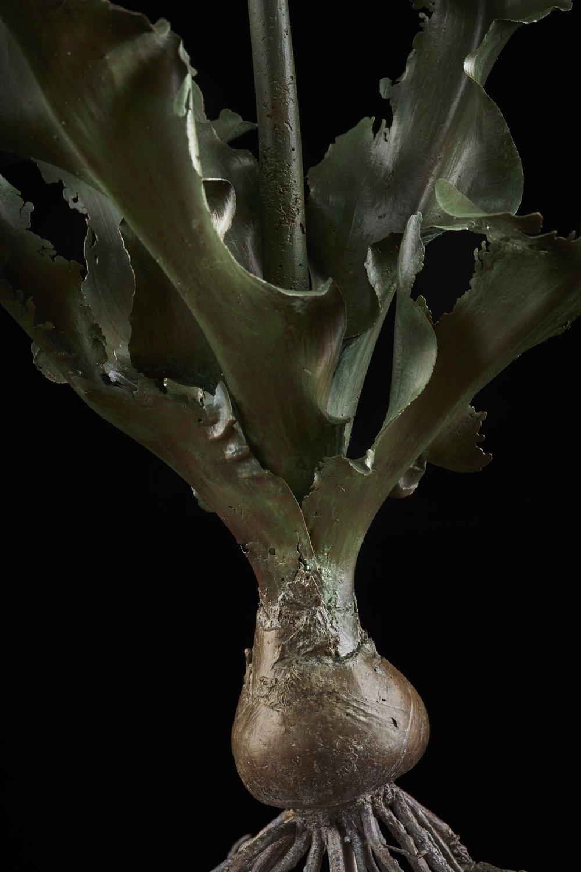 NicBladenBotanicals_LondonEX_Veltheimia capeensis_k6048.jpg
