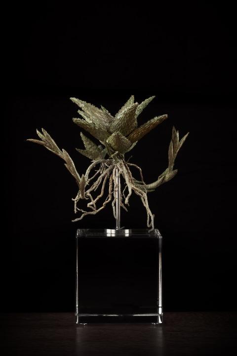 <i>Aloe Descoingsii</i>