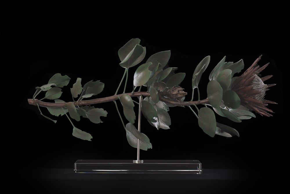 <i> Protea Cynaroides </i>