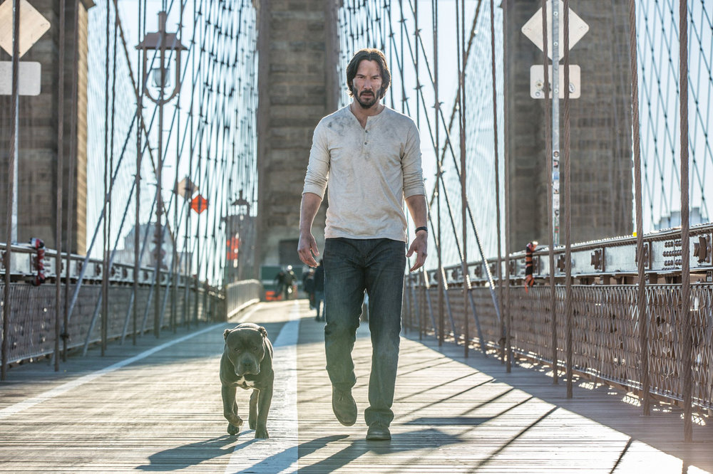 This dog and Keanu Reeves star in 'John Wick: Chapter 2'.