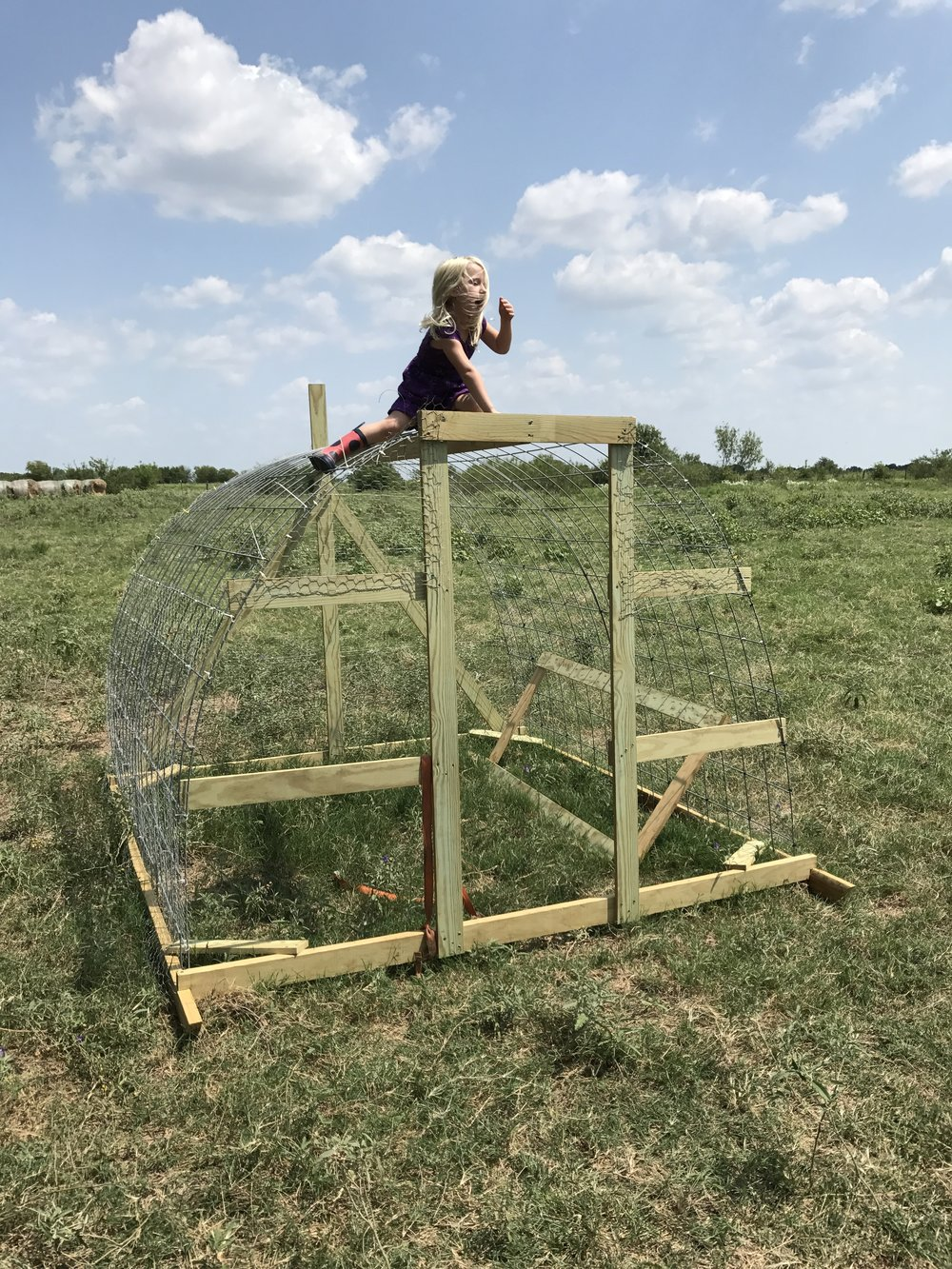 One of the hoop coops in progress - before the tarp and electric line were added. Strong enough to hold a wild child!