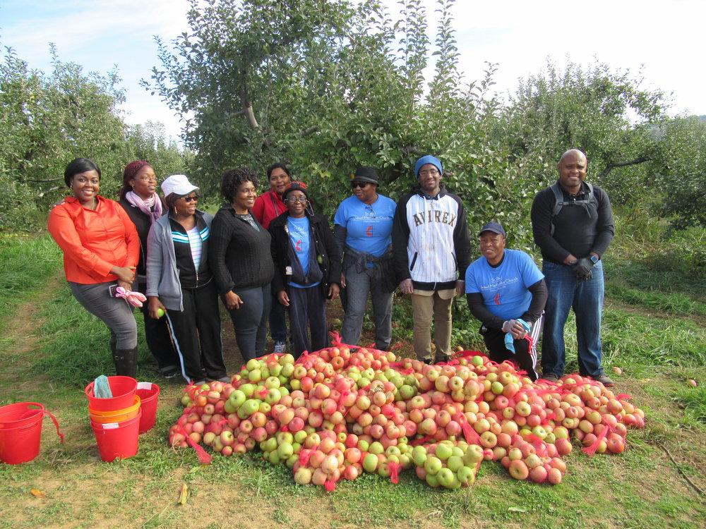 Gleaning Oct. 28 2017 (21).JPG
