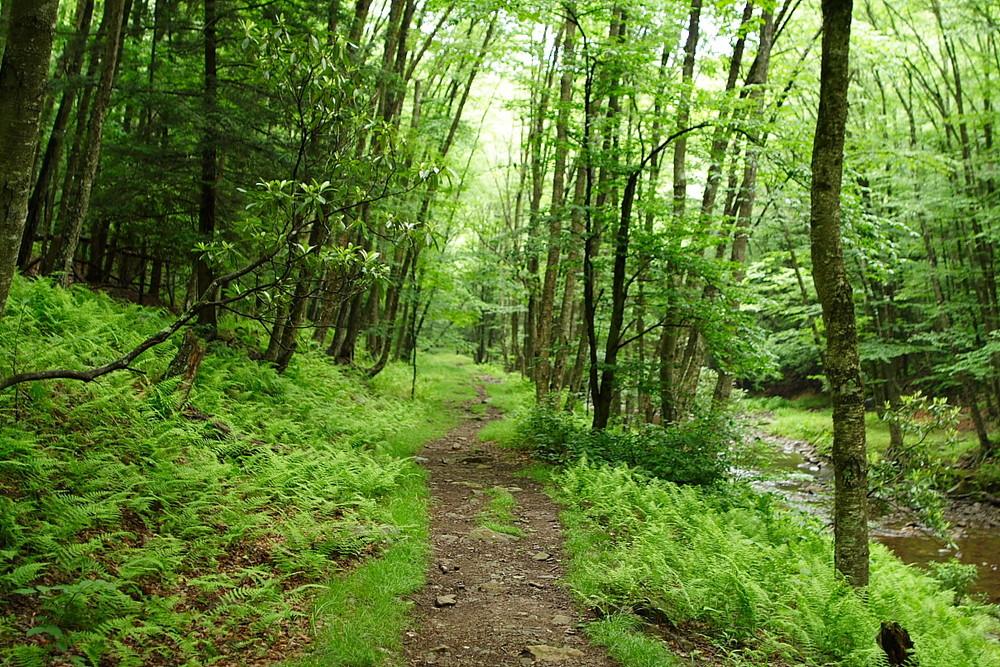 Copy of Catskill Trail