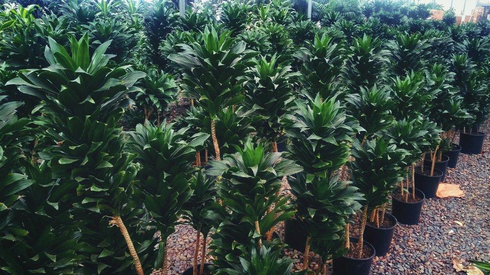 plants_grow.jpg
