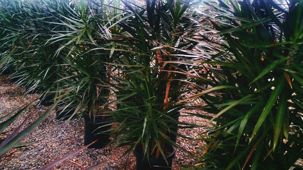 plants_multi.jpg