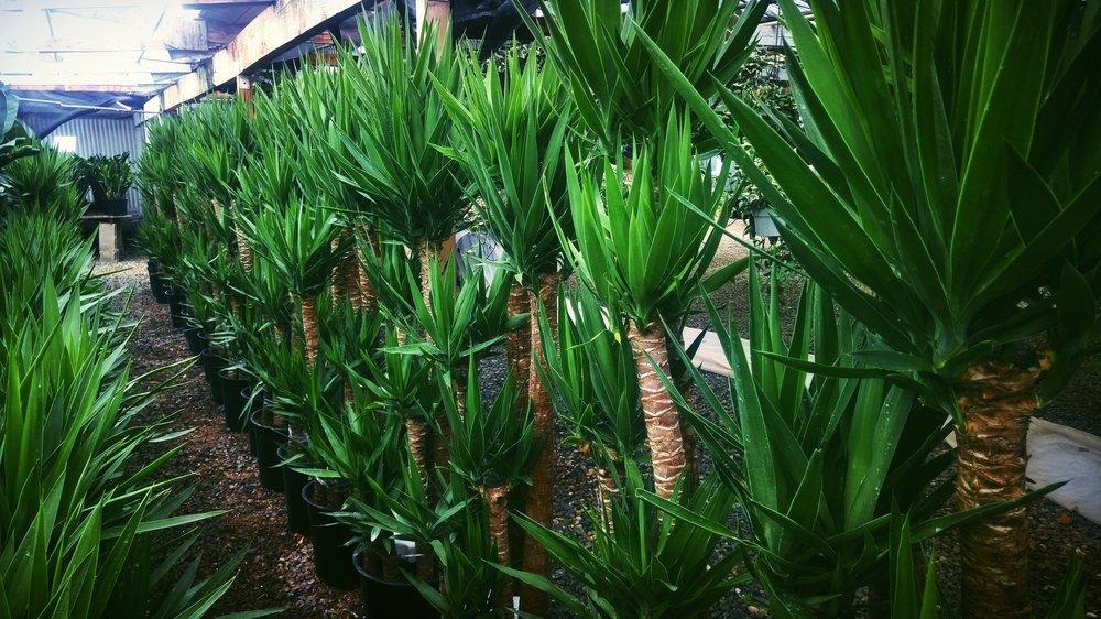 plants_row.jpg