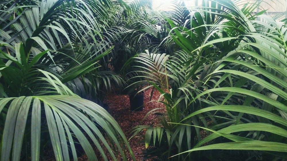 plant_palms.jpg