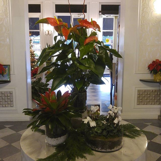 Christmas lobby arrangement we did for Inn at the Park