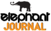 Author for Elephant Journal